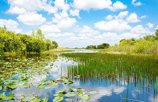South Florida Everglades